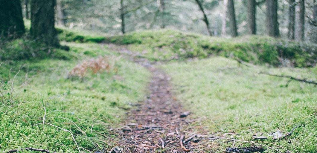 Börja med trailrunning